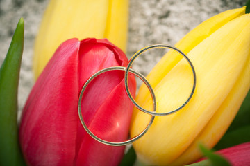 wedding rings on red and yellow tulip