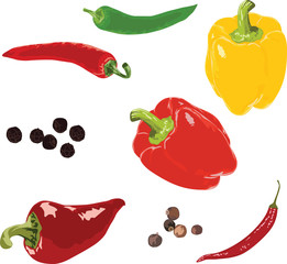 set of different peppers isolated