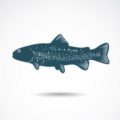 Illustrations of Rainbow Trout.