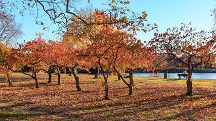 Fall at the Charles River