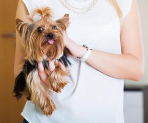 woman caressing charming Yorkie terrier pet