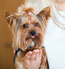 Female owner holding Yorkshire Terrier