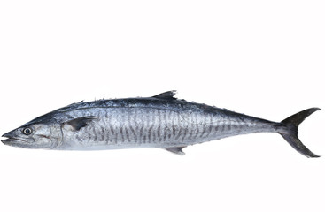 Fresh king mackerel fish