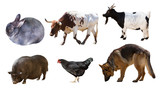 Shepherd and other farm animals. Isolated over