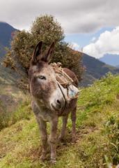 Portrait of a donkey, farm animal
