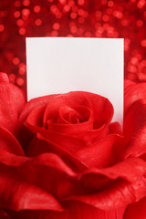 Red rose with blank note