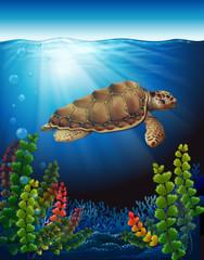 A sea turtle underwater