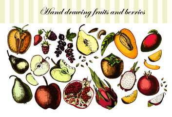 Hand drawing fruits and berries