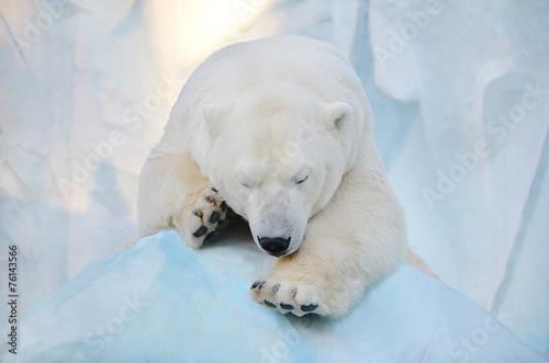 Papiers peints Ours Blanc Белый медведь спит.