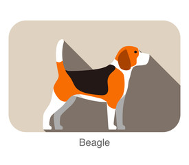 Beagle dog breed standing flat icon design