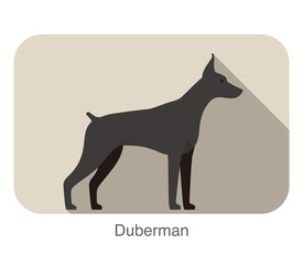 Duberman dog breed standing flat icon design