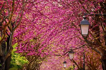 Viale fiorito