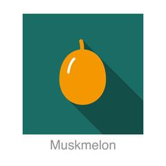 Muskmelon fruit flat icon design