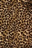 Wild animal skin pattern - 76146534