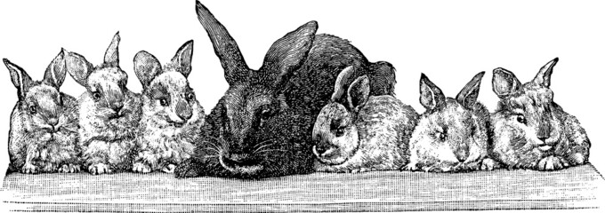 Vintage graphic rabbits