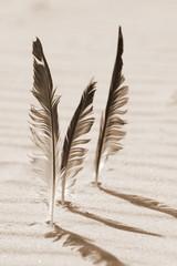 drei Federn stecken im Sand