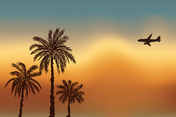 Palm trees and a plane against the sky. Sunset in Goa.
