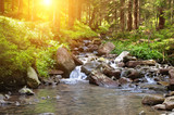 Fototapety river, forest and sun