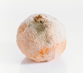 Tangerine with mold