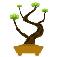 松の木の盆栽