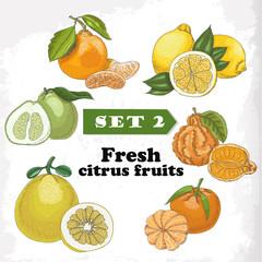 Set  Fresh citrus fruits