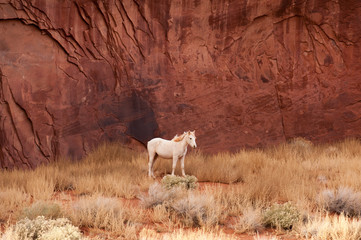 White horse by the red rocks of Navajo Monument Valley