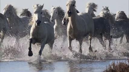 herd of horses2