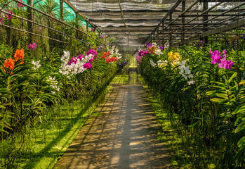 Colorful Orchid farm