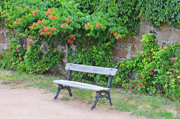 Wooden bench and flowers in the park