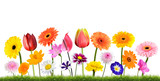 Fototapety Colorful Flowers Growing in Grass Isolated on White