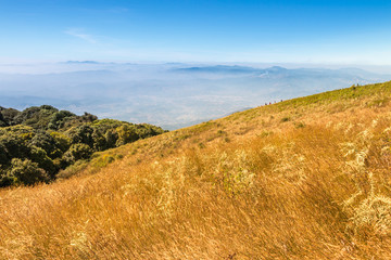 Golden field at Kio Mae Pan viewpoint, Doi Inthanon National Par