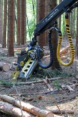 Holzerntemaschine im Wald