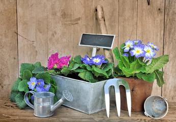pensées en pot et outils de jardinage sur fond en bois