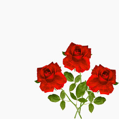 three red roses tiger