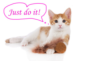 Niedliche Katze mit Motivations Spruch