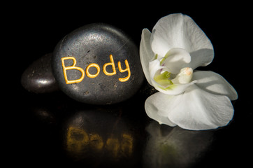body word and white orchid