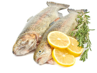Trout fish with lemon isolated on white background on white back