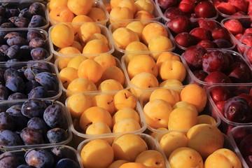 susina prugna frutta produzione tipica emilia romagna