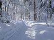 canvas print picture - winterlandschaft