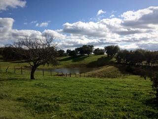 Paisaje de pradería con arboleda y lago