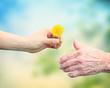 Leinwanddruck Bild - Young woman giving a dandelion to senior woman