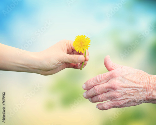Young woman giving a dandelion to senior woman - 76179162