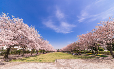 公園のお花見