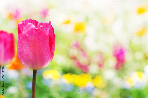 Foto op Plexiglas Tulp 春の花壇