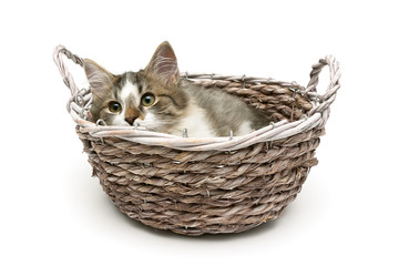 small fluffy kitten lies in a basket on a white background