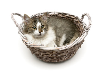 kitten lying in a basket isolated on a white background
