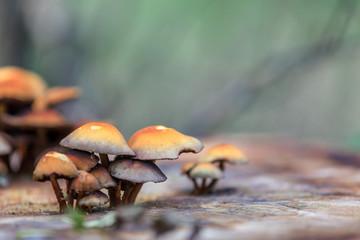 Baumpilze im Wald