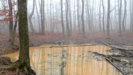 Wallow in the oak autumn forest
