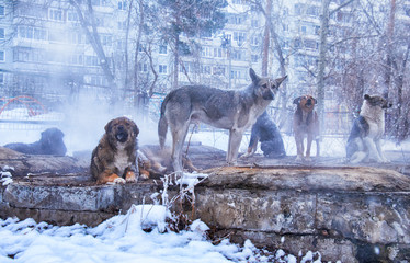Homeless dogs in winter