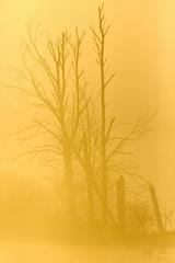 Tree trunks in sunrise backlight
